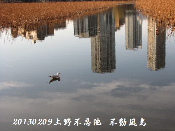 0209shinobazu10.jpg