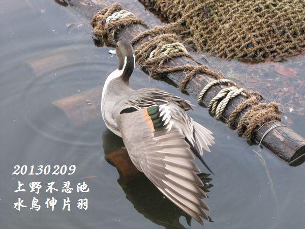 0209shinobazu17a.jpg