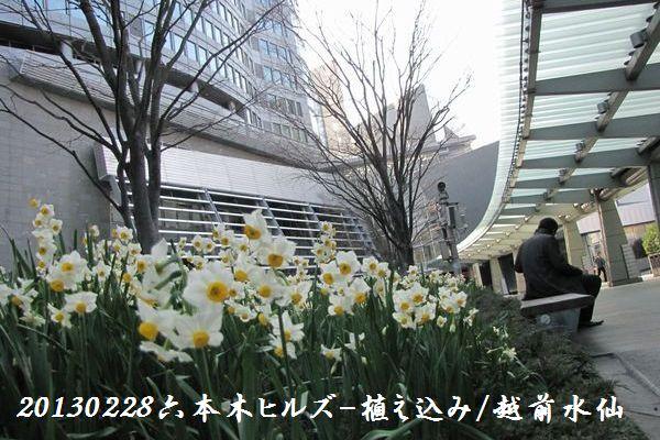 0228suisen02.jpg