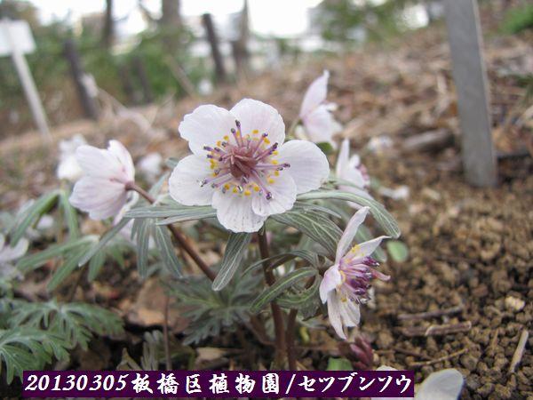 0305akatsuka09.jpg