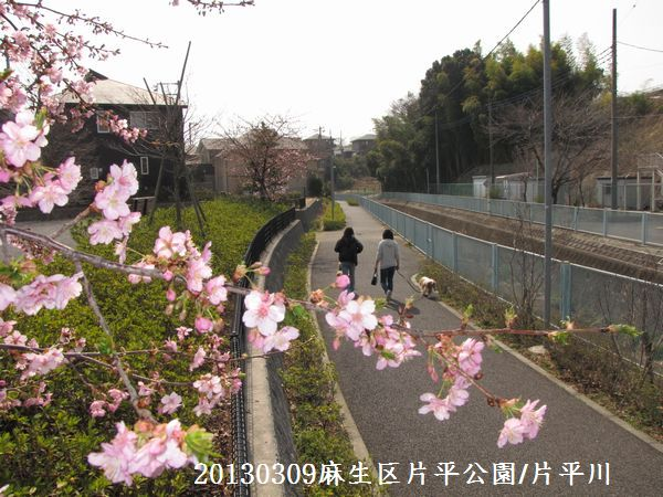 0310sakura04.jpg