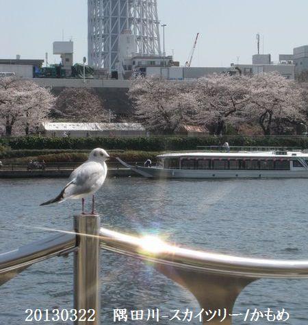 0322sumida05.jpg