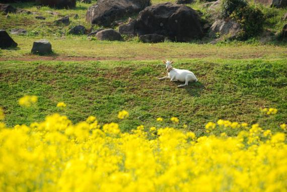 2011年4月23日長串山 (53)