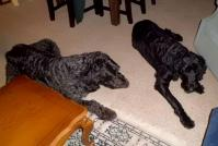 犬もリラックス