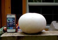 パフボールの大きさ