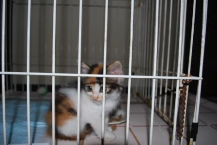 猫 047