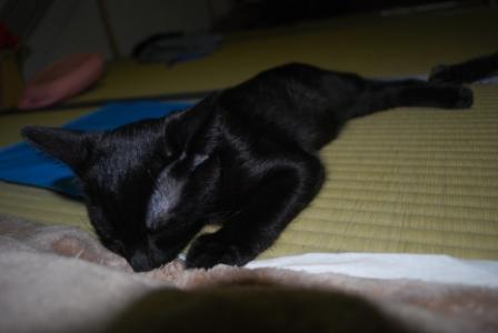猫 094