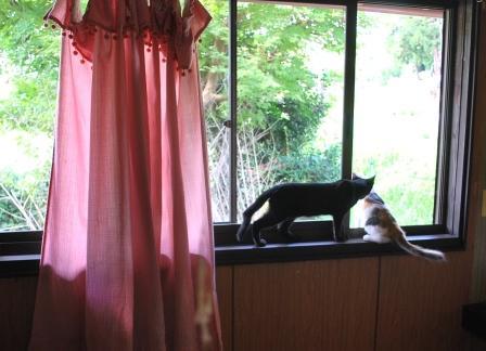 窓開いてる.