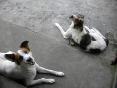 Ranller y Boby