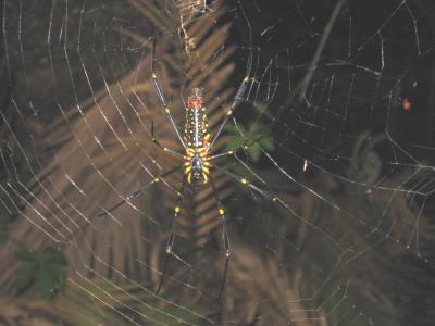 蜘蛛女の誘惑