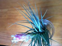 Flower-Airplants.jpg