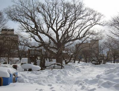 2月16日(木)の天気