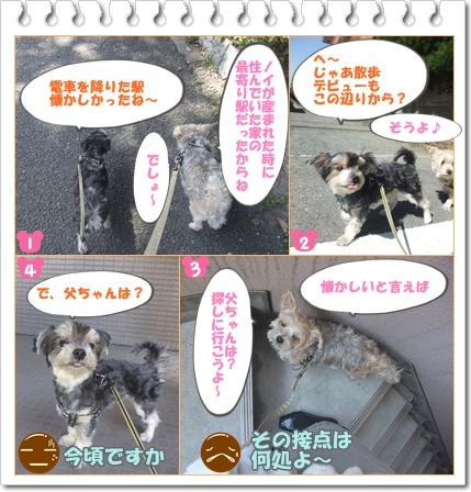 シノ散歩xxo
