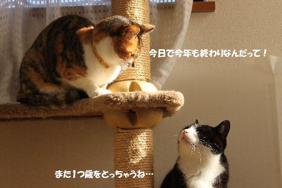 IMG_6419.jpg