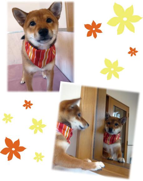 柴犬 パルコ2