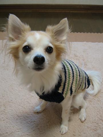 セーター似合う?