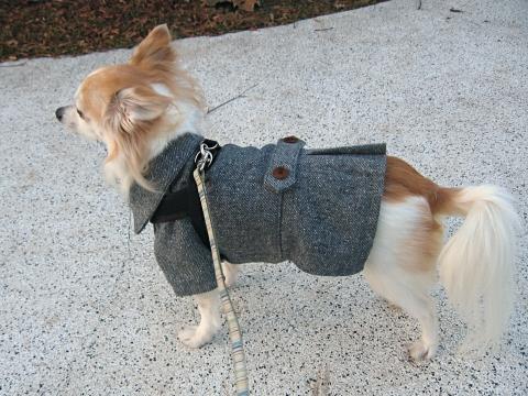 コートを着てお散歩