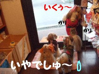 2009_11050010.jpg