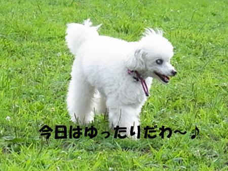 RIMG4488.jpg