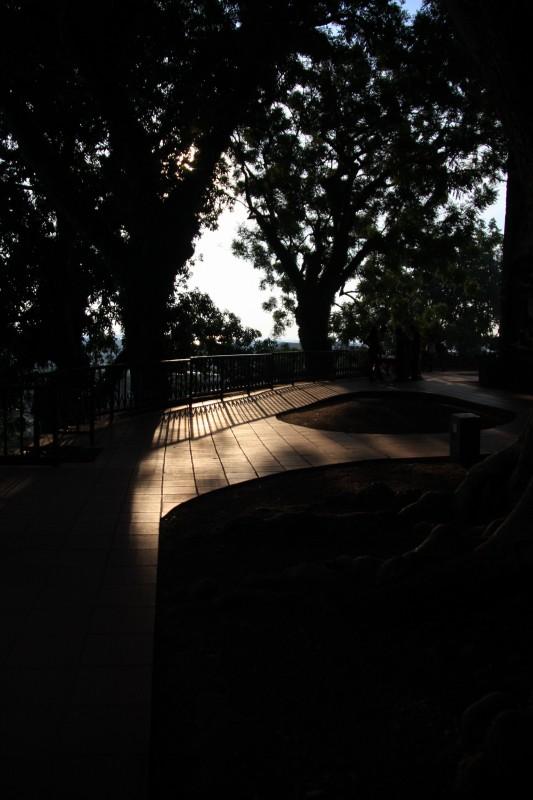 光と影の庭