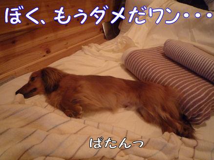 旅行報告(クラインガルテン)6