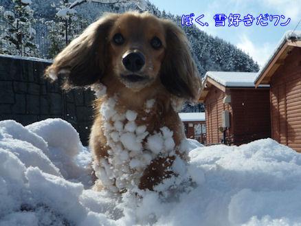 雪嫌い、返上! (旅行報告3)5