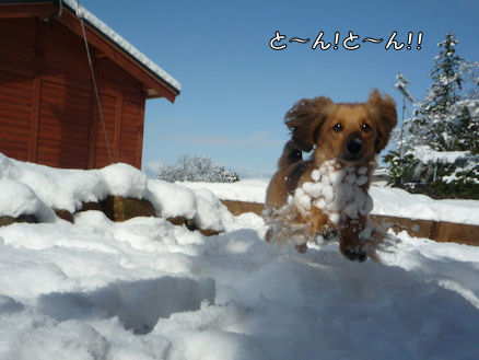 雪嫌い、返上! (旅行報告3)4