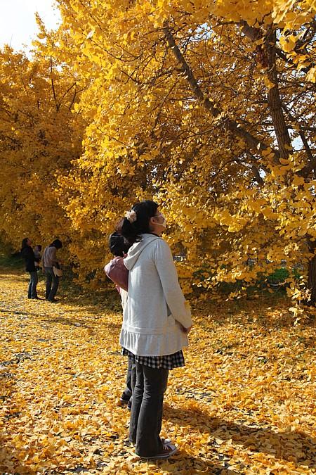 祖父江 黄葉祭り2009 黄葉を眺む