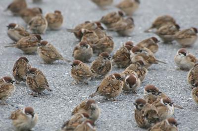 雀は毎日幸せ