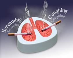 肺皿(笑)