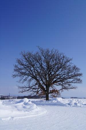 冬の富良野美瑛3