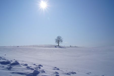 冬の富良野美瑛5