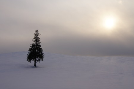 冬の富良野美瑛9