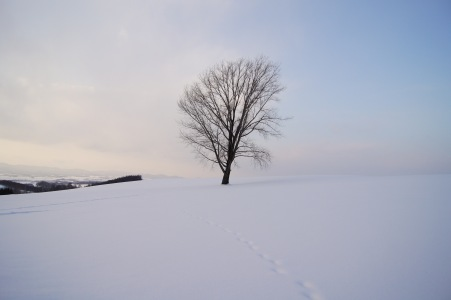 冬の富良野美瑛10