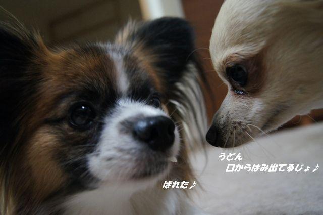 DSC02633_20120227162049.jpg
