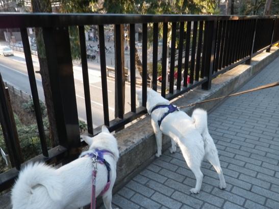 2013.1.27 井の頭公園・歩道橋の上で…