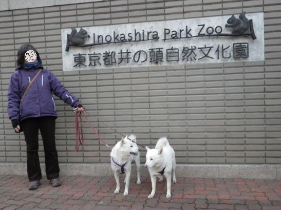 2013.1.27 井の頭自然文化園