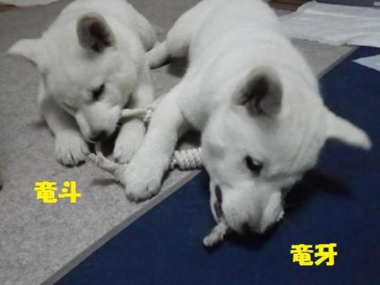2013.1.29 一緒にカミカミ