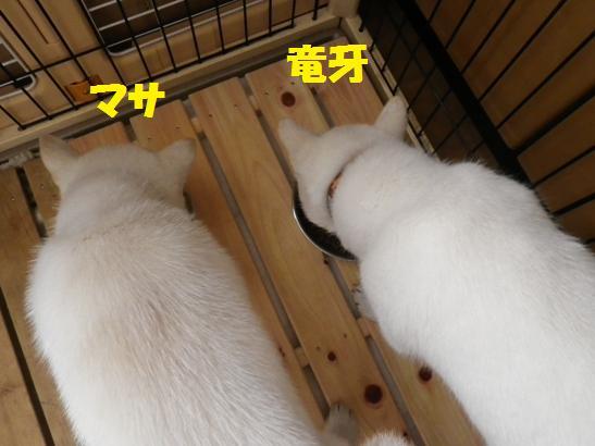 2013.1.31 チェンジ③