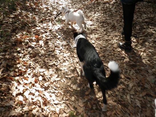 2013.2.3 森林公園7(竜牙&モリコ)