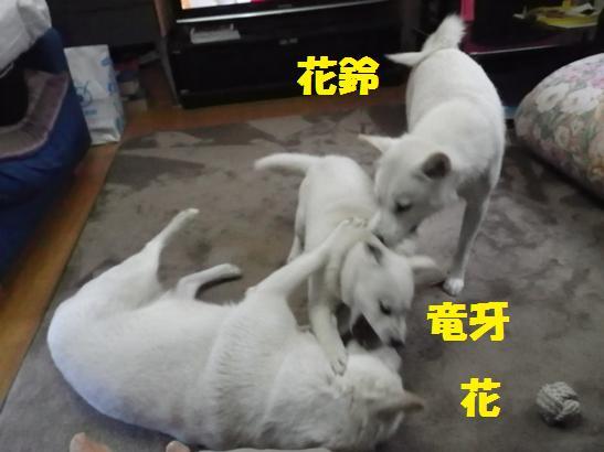 2013.2.4 三代でガウガウだ~!!