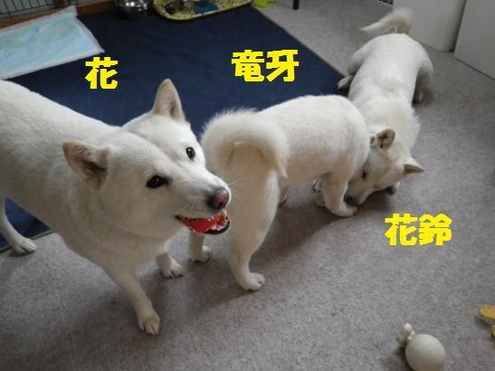 2013.2.5 朝の三頭