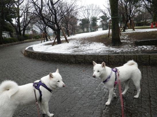 2013.2.6 今日の雪