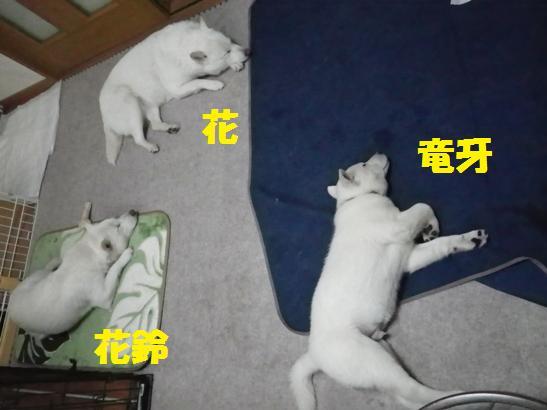 2013.2.6 お昼寝A