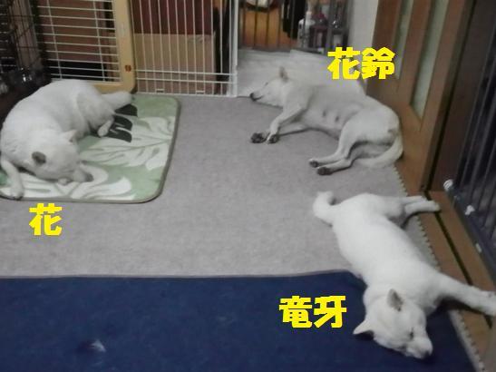 2013.2.6 お昼寝B