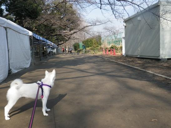 2013.2.7 羽根木公園・花鈴