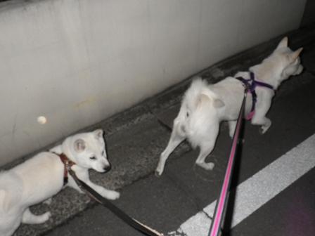 2013.2.7 花鈴&竜牙1