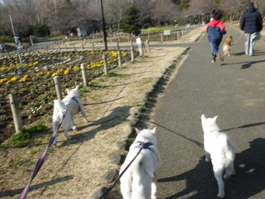 2013.2.10 花の丘公園