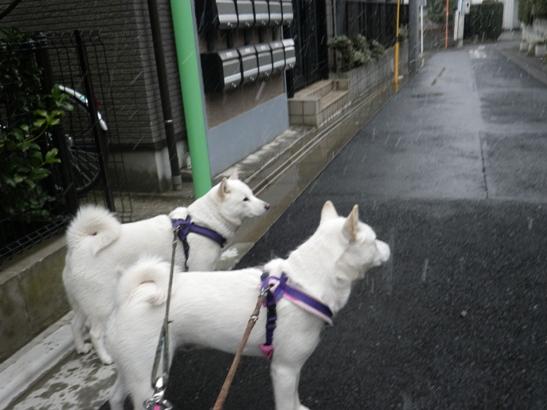 2013.2.19 雪が向かってくるね~