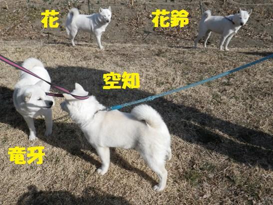 2013.3.3 番外編1・白花一家